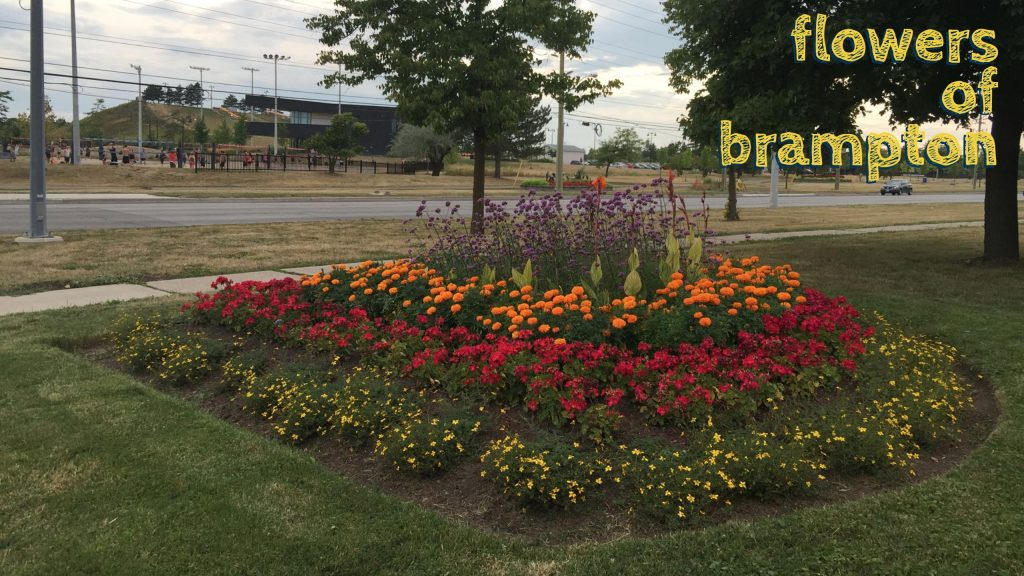 flowers of brampton bramalea rd and goodwood rd 5
